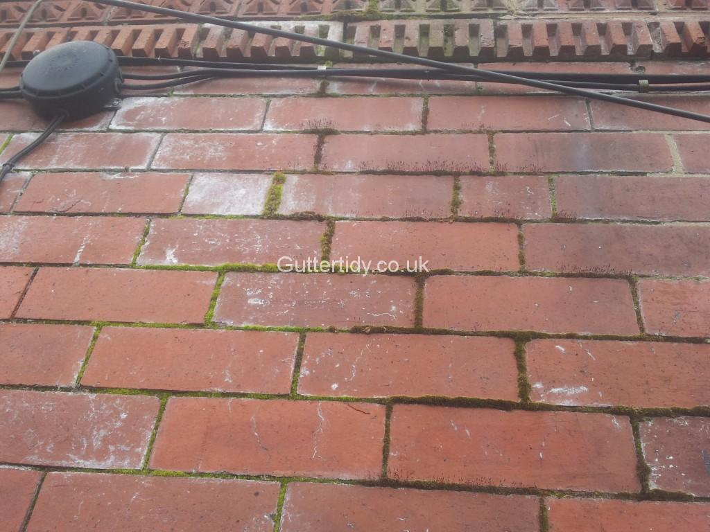 Moss growing in pointing on brick wall caused by overflowing guttering