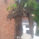 roots from top of a blocked downpipe