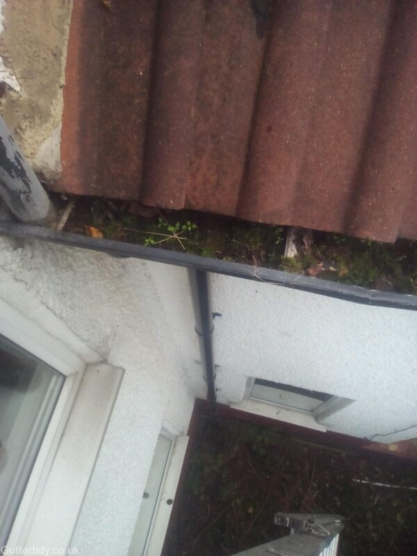 Aluminium gutter which has become blocked and full of moss